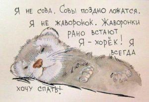 Сонное состояние