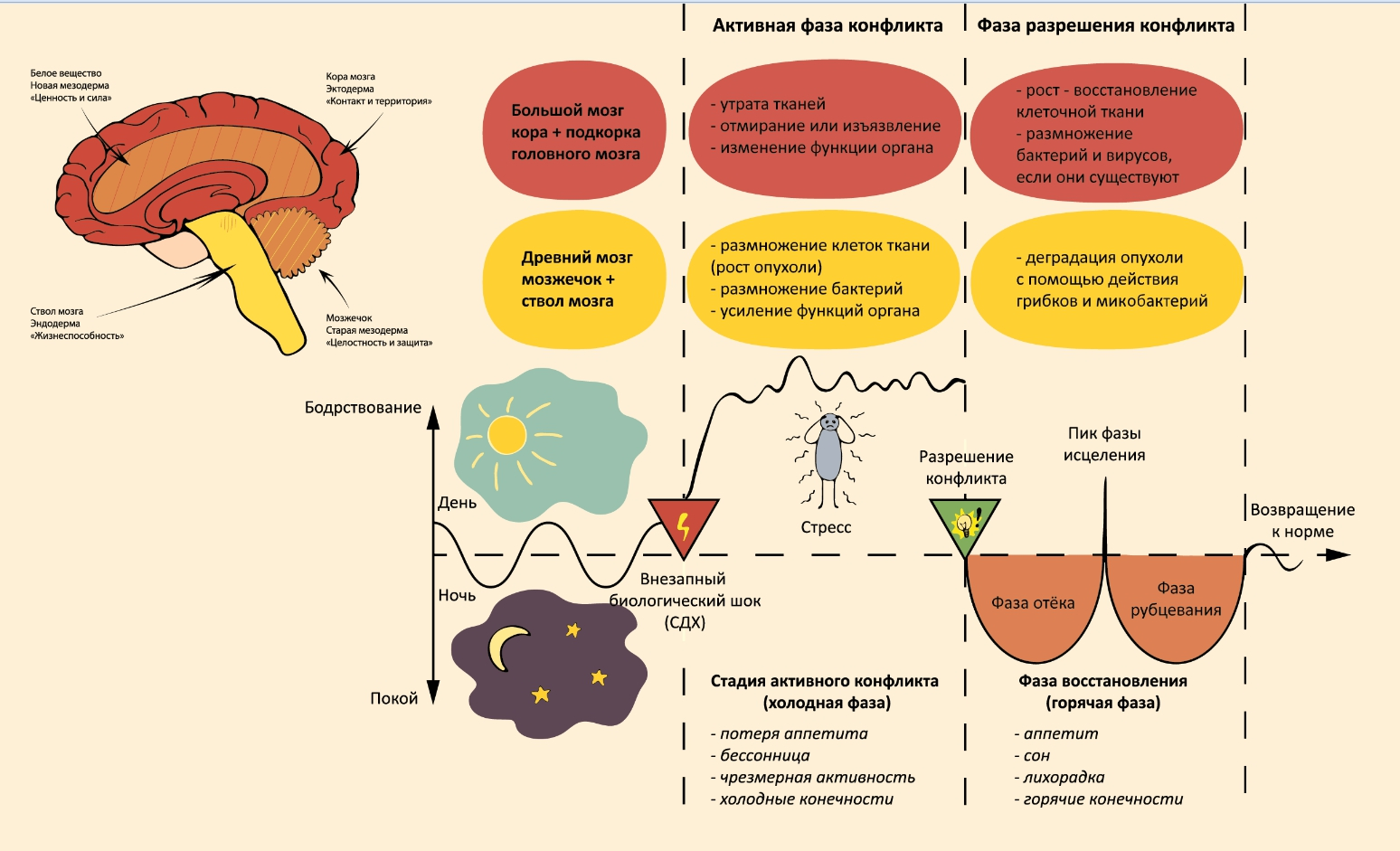Схема германской новой медицины